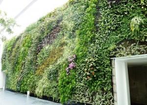 אדריכלות ובנייה ירוקה - תכנון ועיצוב קירות ירוקים