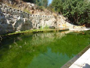 בריכה אקולוגית - בריכת שחייה ביולוגית