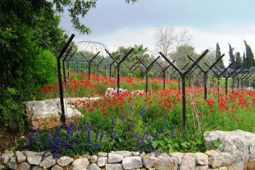 גן פרחי בר