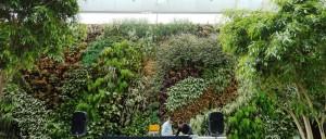 קירות ירוקים - אחוזת מודיעין