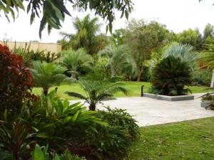 אדריכלות נוף גן טרופי