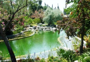בריכת אקולוגית - בריכת שחייה / אגם שחייה ביולוגי