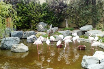 Flamingo Pool